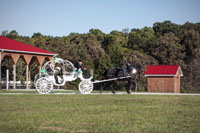 Our most cherished carriage for weddings.